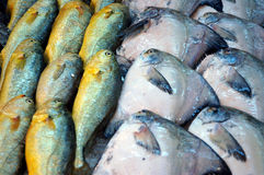 αγορά ψαριών στοκ φωτογραφία με δικαίωμα ελεύθερης χρήσης