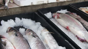 αγορά ψαριών φιλμ μικρού μήκους