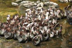 Αγορά ψαριών Anping Στοκ Εικόνες