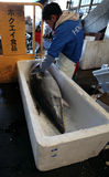Αγορά ψαριών Tsukiji Στοκ φωτογραφία με δικαίωμα ελεύθερης χρήσης