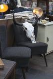 Αγορά Antic Spitalfields το κρανίο βούβαλων είναι στην παλαιά εκλεκτής ποιότητας καρέκλα Στοκ εικόνες με δικαίωμα ελεύθερης χρήσης