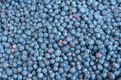 αγορά s αγροτών βακκινίων Στοκ εικόνες με δικαίωμα ελεύθερης χρήσης