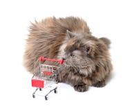 αγορές γατών κάρρων Στοκ εικόνες με δικαίωμα ελεύθερης χρήσης
