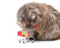 αγορές γατών κάρρων Στοκ φωτογραφία με δικαίωμα ελεύθερης χρήσης