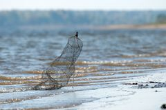 Αγορές για την αποθήκευση των πιασμένων ψαριών Στοκ Εικόνα