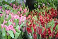 Αγορές λουλουδιών τουλιπών Στοκ φωτογραφίες με δικαίωμα ελεύθερης χρήσης