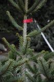 Αγοραστής δέντρων Christms Στοκ φωτογραφία με δικαίωμα ελεύθερης χρήσης