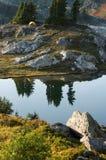αγριότητα θέσεων για κατ&alph Στοκ εικόνες με δικαίωμα ελεύθερης χρήσης