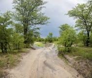 Αγριότητα και τοπίο στην επιφύλαξη παιχνιδιού Moremi κατά τη διάρκεια της βροχής Στοκ φωτογραφία με δικαίωμα ελεύθερης χρήσης