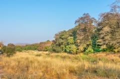 Αγριότητα στο εθνικό πάρκο Ranthambhore Στοκ Εικόνες