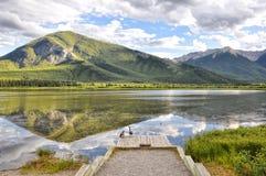 Αγριόχηνα και Vermillion αντανάκλαση λιμνών Στοκ Φωτογραφία
