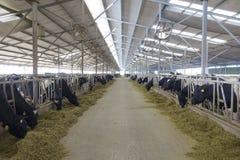 Αγροκτήματα γαλακτοκομικών βοοειδών στοκ φωτογραφίες