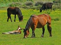 αγροκτήματα ζώων στοκ φωτογραφίες με δικαίωμα ελεύθερης χρήσης