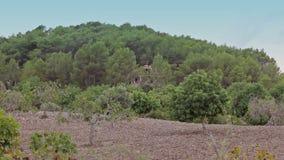 Αγροκτήματα στα προάστια Cala Mendia απόθεμα βίντεο