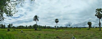 αγροκτήματα στοκ φωτογραφίες