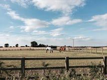 αγροτικά άλογα δύο Στοκ Εικόνα
