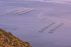 Αγροτικά δίχτυα ψαριών Στοκ Εικόνες