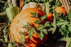 Αγροτικά λαχανικά στο καλάθι Φυτικός φρέσκος κήπος οργανικός στοκ φωτογραφία