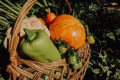 Αγροτικά λαχανικά στο καλάθι Φυτικός φρέσκος κήπος οργανικός στοκ φωτογραφία με δικαίωμα ελεύθερης χρήσης