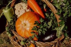 Αγροτικά λαχανικά στο καλάθι Φυτικός φρέσκος κήπος οργανικός στοκ εικόνα με δικαίωμα ελεύθερης χρήσης
