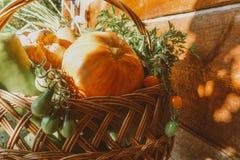 Αγροτικά λαχανικά στο καλάθι Φυτικός φρέσκος κήπος οργανικός στοκ εικόνα