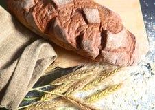 Αγροτικά φλοιώδη αυτιά ψωμιού και σίτου σε ένα σκοτάδι Στοκ φωτογραφίες με δικαίωμα ελεύθερης χρήσης