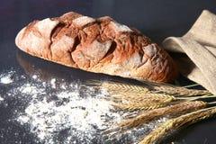 Αγροτικά φλοιώδη αυτιά ψωμιού και σίτου σε ένα σκοτάδι Στοκ Φωτογραφία