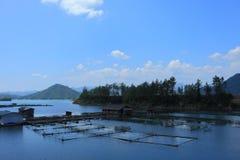 αγροτικά ψάρια Στοκ Φωτογραφίες
