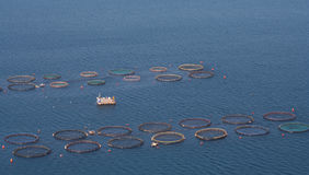 αγροτικά ψάρια Στοκ Εικόνες