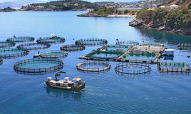 αγροτικά ψάρια Στοκ εικόνα με δικαίωμα ελεύθερης χρήσης