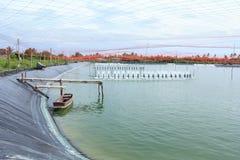 αγροτικές γαρίδες στοκ φωτογραφία με δικαίωμα ελεύθερης χρήσης