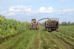 αγροτικές εργάσιμες μέρ&epsilo Στοκ εικόνες με δικαίωμα ελεύθερης χρήσης