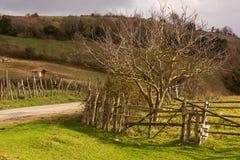 Αγροτικές περιοχές της επαρχίας Sinop Στοκ Εικόνες
