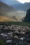 Αγροτικές πρόβατα και αίγες ενάντια στο τοπίο βουνών Στοκ φωτογραφία με δικαίωμα ελεύθερης χρήσης