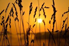 αγροτική ανατολή στοκ φωτογραφία με δικαίωμα ελεύθερης χρήσης