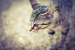 Αγροτική γάτα στοκ φωτογραφία με δικαίωμα ελεύθερης χρήσης