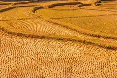 Αγροτική γη με την πλευρά φυτειών Στοκ Φωτογραφίες