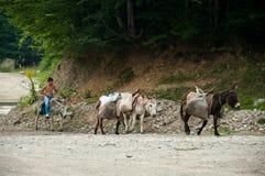 Αγροτική εργασία με το παιδί και τους γαιδάρους Στοκ φωτογραφία με δικαίωμα ελεύθερης χρήσης