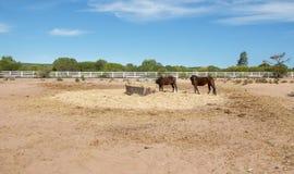 Αγροτική ζωή: Άλογα κάστανων Στοκ εικόνες με δικαίωμα ελεύθερης χρήσης