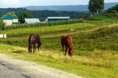 Αγροτική ζωή: βοσκή αλόγων Στοκ Εικόνα