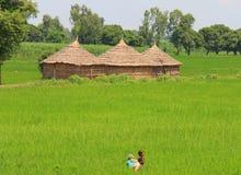 Αγροτική ζωή στην Ινδία: πεδία και αγρότες σίτου Στοκ Φωτογραφία