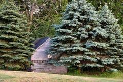 Αγροτική καμπίνα στα δέντρα πεύκων Στοκ φωτογραφία με δικαίωμα ελεύθερης χρήσης