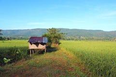 Αγροτική καλύβα στον τομέα ρυζιού στοκ φωτογραφίες με δικαίωμα ελεύθερης χρήσης