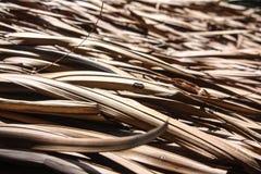 Αγροτική ξύλινη στέγη σπιτιών Στοκ Φωτογραφίες