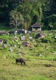 Αγροτική περιοχή στο kotmale, Σρι Λάνκα Στοκ Φωτογραφία