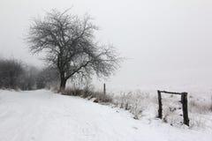 Αγροτική πορεία και άφυλλο δέντρο το χειμώνα Στοκ φωτογραφία με δικαίωμα ελεύθερης χρήσης