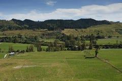 Αγροτική σκηνή της Νέας Ζηλανδίας Στοκ Φωτογραφία