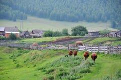 Αγροτική φύση στη Ρωσία Στοκ εικόνα με δικαίωμα ελεύθερης χρήσης