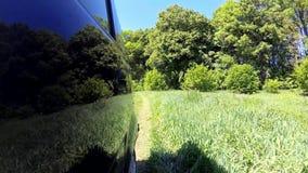 Αγροτική Pov δέντρων γήινων δρόμων όμορφη αειθαλής πολύβλαστη πράσινη πίσω πλευρά απόθεμα βίντεο