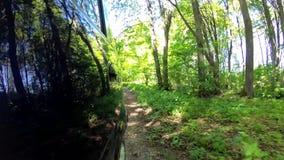 Αγροτική Pov δέντρων γήινων δρόμων όμορφη αειθαλής πολύβλαστη πράσινη πίσω πλευρά φιλμ μικρού μήκους